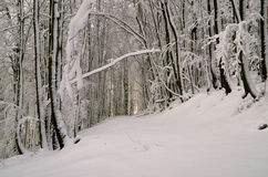 Forest in winter. Illuminated forest in the winter months Royalty Free Stock Photography
