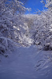 Forest in winter. Illuminated forest in the winter months Royalty Free Stock Photo