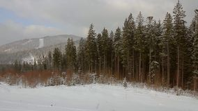 Forest winter landscape stock video footage