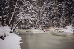 Forest winter landscape. Winter in forest. Icy river in the mountains Stock Photo
