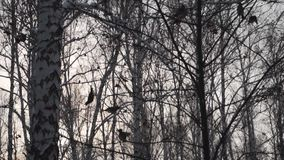 Forest in winter. A lot of snow. A lot of snow. In the foreground, birds fly from branch to branch. Forest in winter. A lot of snow. In the foreground, birds stock video