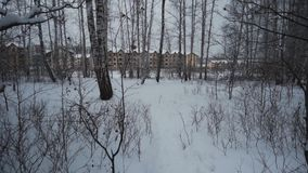 Forest in winter. A lot of snow. POV. Video from the first person. Exit from the forest. In the background are three-story residential buildings stock footage