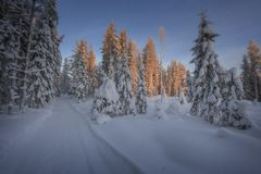 Forest in winter mountain landscape Royalty Free Stock Photography