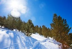 Forest at winter in mountains Royalty Free Stock Images