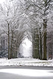 Forest in winter in Netherlands Stock Images