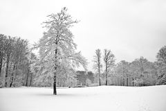 Forest in winter in Netherlands Royalty Free Stock Images