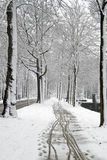 Forest in winter in Netherlands Stock Image