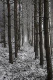 Forest in Winter. Forest at Otley Chevin, West Yorkshire,  with bare trees and snow covered twigs and branches on the forest floor Royalty Free Stock Photo