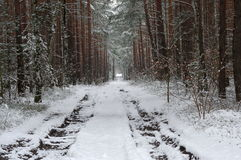 Forest in winter. Stock Image
