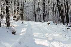 Forest in winter Stock Photos