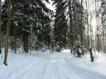 A forest winter road covered with snow. A forest winter road covered with white snow Stock Photos