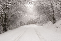 Forest in winter scenery. During winter snow forest road Royalty Free Stock Photography