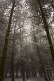 Forest in winter. Scenic view of Chevin forest park in winter, Otley, England Stock Photography