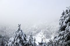 Forest and winter. Winter season Royalty Free Stock Images