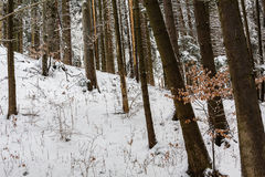 Forest winter season Royalty Free Stock Images