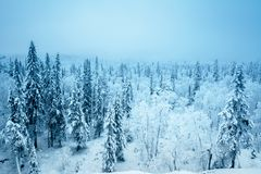 Forest in winter season. Europa Stock Images
