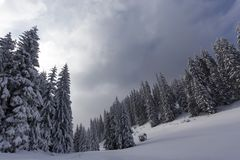 Forest in winter season in mountain with a food shelter for wild Stock Photo