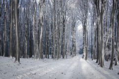 Forest in winter with snow Stock Photography