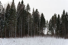 Forest at winter with snow on bushes Stock Photo