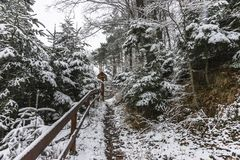 Forest in the winter. Winter with snow  in  forest at the Lake Rożnów in Poland .view in the center of forest Stock Photography