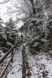Forest in the winter. Winter with snow  in  forest at the Lake Rożnów in Poland .view in the center of forest Royalty Free Stock Image