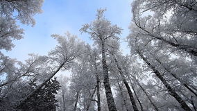 Forest in winter. stock footage
