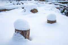 Forest in winter with snow. Wood or forest in winter, fallen and broken trees covered by snow royalty free stock images