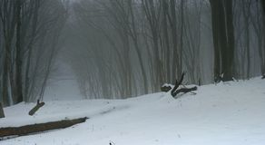 Forest in winter. This is somber morning in Caucasus forest in winter Royalty Free Stock Images