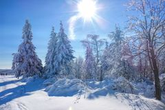 Forest in winter and sun Royalty Free Stock Photography