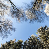 Forest in Winter on a Sunny Day Stock Photography