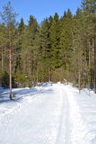 Forest in winter, sunny day. Stock Images