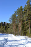 Forest in winter, sunny day. Stock Photo