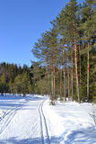 Forest in winter, sunny day. Stock Image