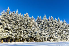 Forest in winter on a sunny day Royalty Free Stock Photography