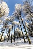 Forest in Winter on a Sunny Day Stock Image