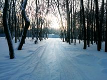 Forest. Winter. Sunset Royalty Free Stock Photos