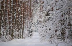 Forest Winter-Szene lizenzfreie stockbilder