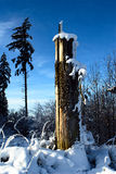 Forest at Winter Time. Tree stump with trees in the background during a sunny winter day with a lot of snow Stock Photography