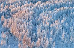 Forest in winter, top view Stock Photo