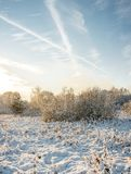 Forest in winter under clouds /sunset in the winter forest royalty free stock images