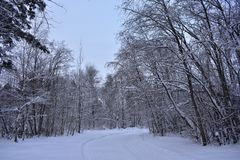 In the forest in winter is unreal beautiful. Wherever you look-around unique beauty. Winter forest is buried in snow drifts. Around seen a dark bare tree stock photos