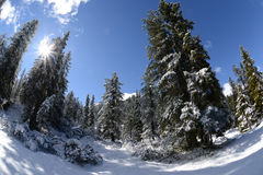 Forest in winter Stock Images