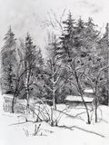 Forest in winter. Winter landscape, trees and bushes on  an edge of coniferous wood Stock Photography