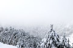 Forest and winter. Winter season Royalty Free Stock Image