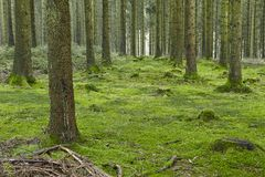 Forest With Moss Royalty Free Stock Photos