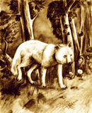 Forest wolf. White wolf strolling around the forest alone Stock Photography