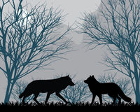 Forest wolves Royalty Free Stock Photo