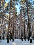 Forest. Wonderful winter forest Russian remote places Stock Photography