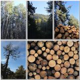 Forest and wood Royalty Free Stock Photos