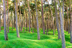 The forest wood and craters on battlefield of Vimy ridge. Royalty Free Stock Photos